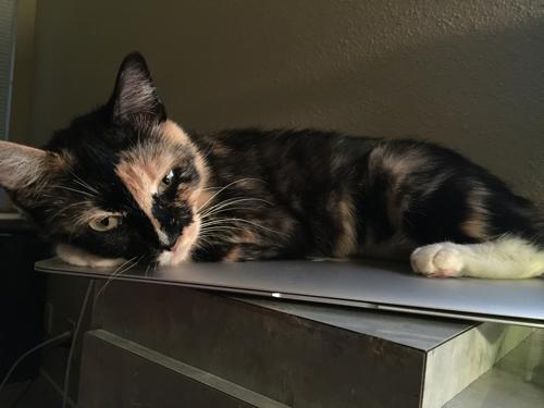 company culture cat tamryn